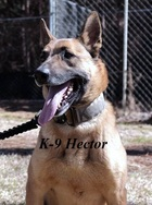 Hector,  Dawson Co. Sheriff's Dept. K-9